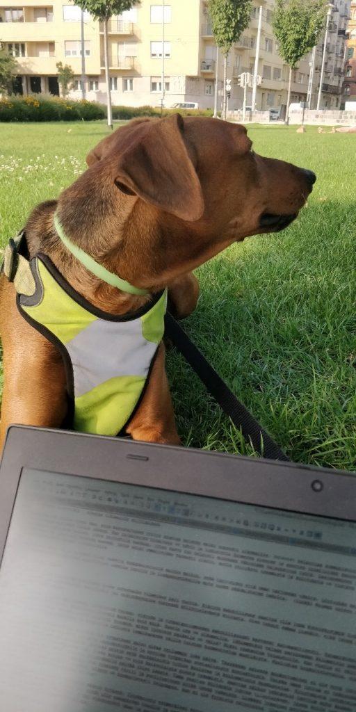 kuva jossa koira ja kannettava tietokone